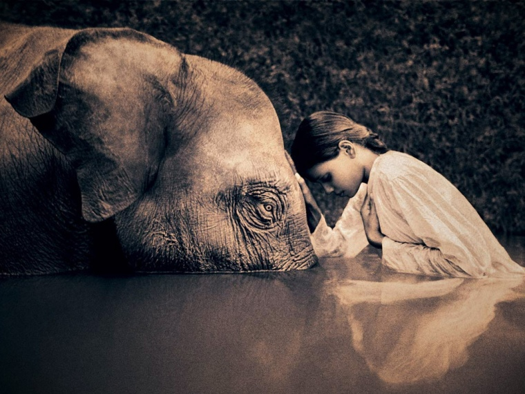 Elephant and human love